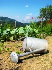 1307758 watering can Top Ten Lessons Learned in a Drought Year