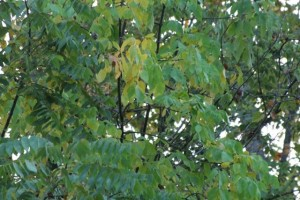 IMG 1153 300x200 Top Ten Signs of an Early Fall
