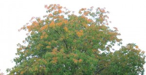 IMG 1158 300x154 Top Ten Signs of an Early Fall