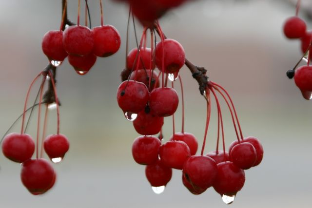 cherries Top Ten Hated Kitchen Chores