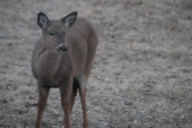Teen Deer Hang Out