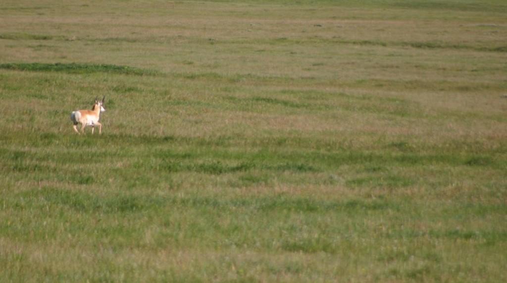 Short grass prairie SD