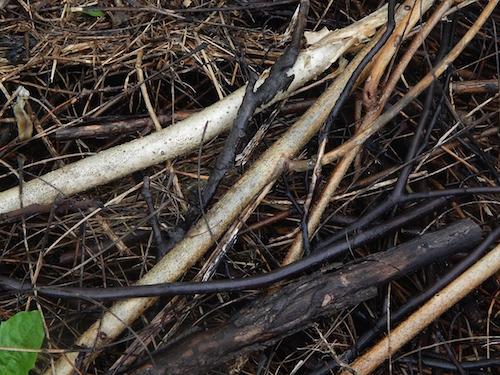 twigs bark leaves